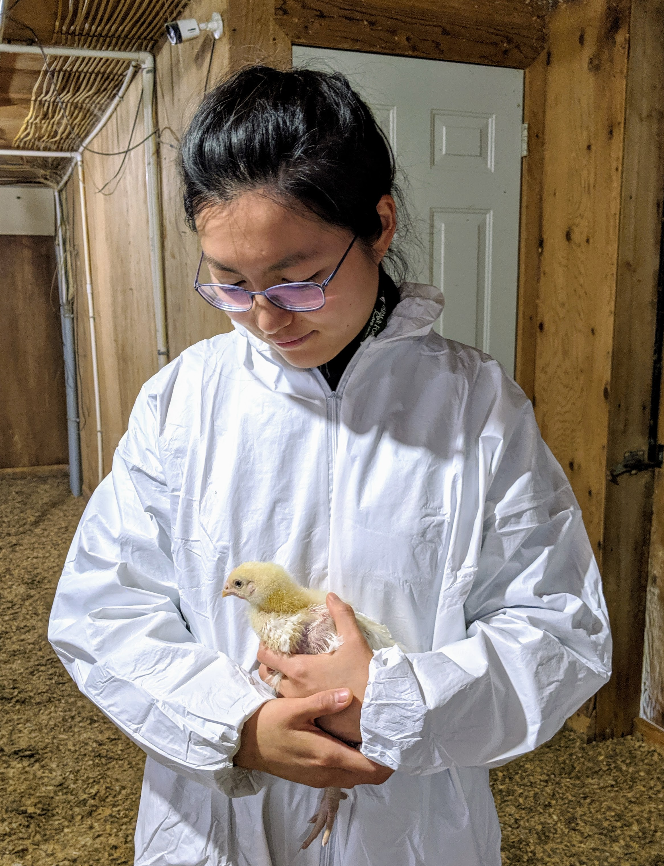 Beini Wang holding a three-week old chicken